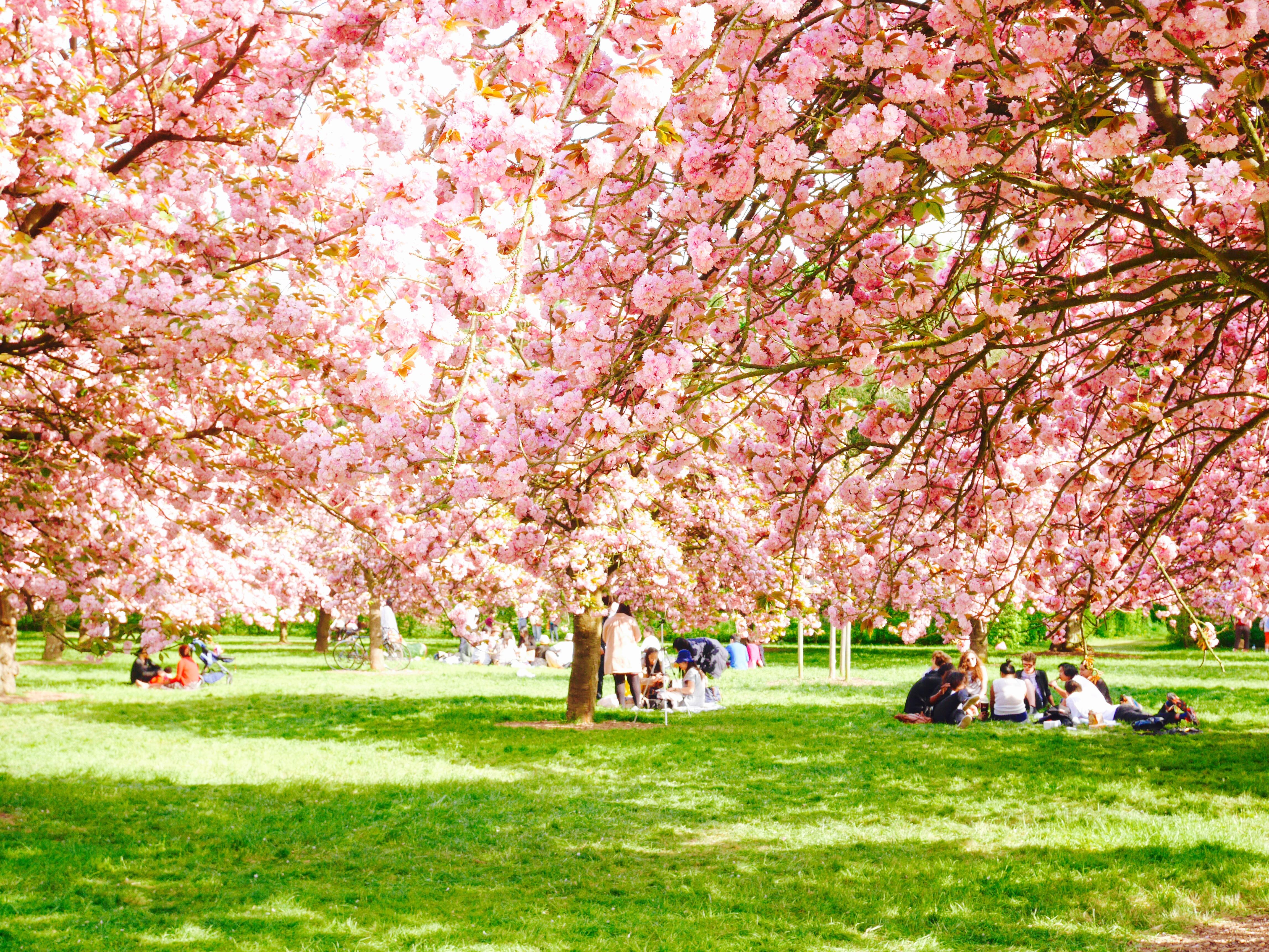 Hanami au parc de sceaux les petites choses blog - Parc de sceaux cerisiers en fleurs 2017 ...