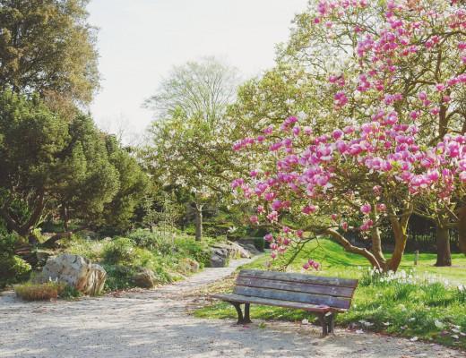 magnolias Breuil