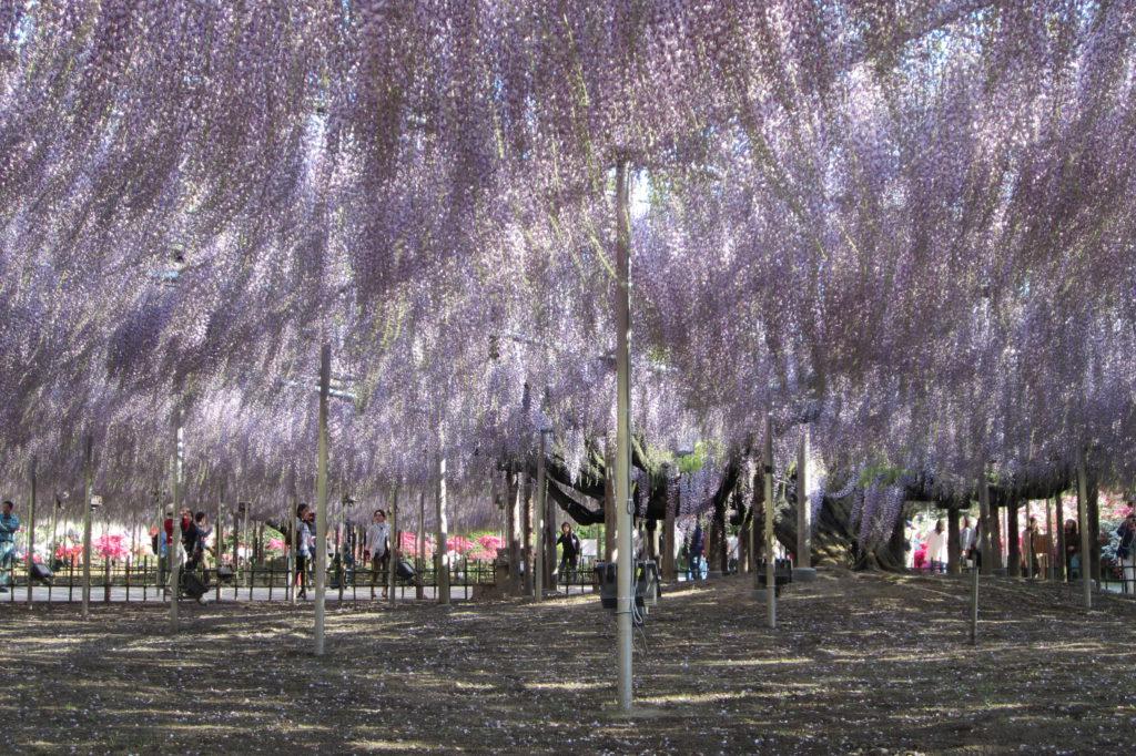 Flower Park d'Ashikaga