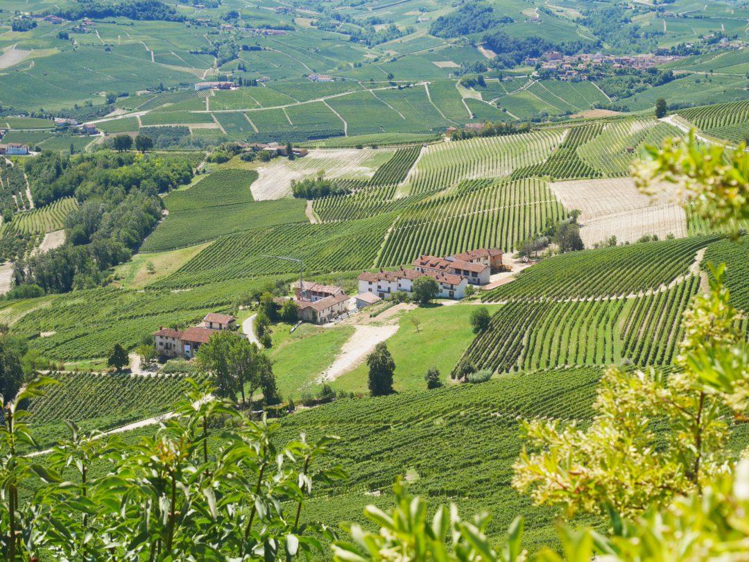 piémont vignes